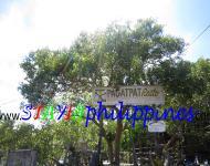 Guimaras resort Pagatpat Guesthouse 1